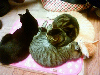 猫を枕にする猫さん