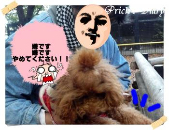 2010112703_convert_20101128131015.jpg