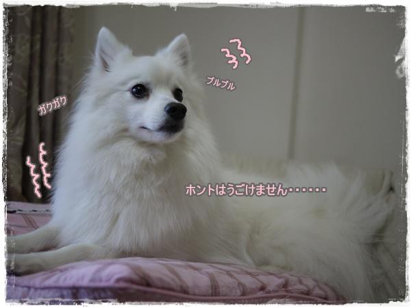 35_20110413223743.jpg
