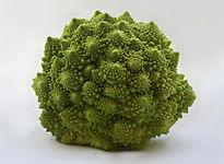 205px-Romanesco_Brassica_oleracea_Richard_Bartz.jpg