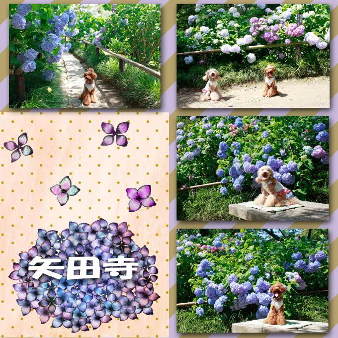 2_20110708201139.jpg