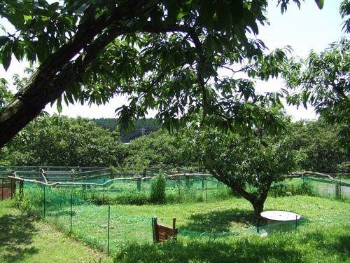 マロンの樹14