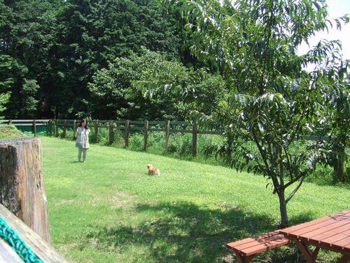 マロンの樹19