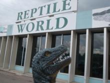 のんびりらいふ@かなだ-Reptile World