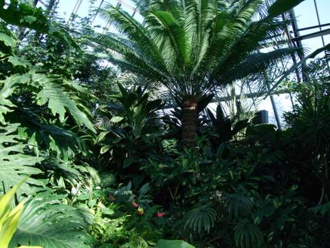Muttart Conservatory 004
