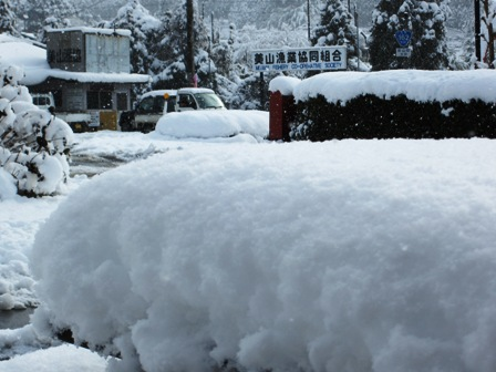 美山漁協も大雪