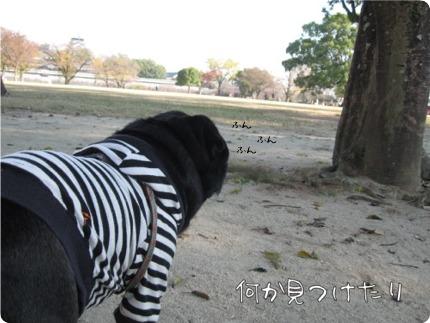 2010.12.6.10らん