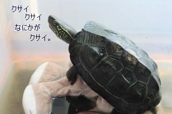 IMG_20120508__06.jpg