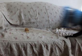 IMG_20121016__04.jpg
