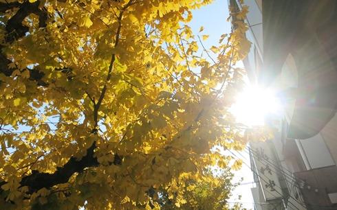 8)銀杏並木
