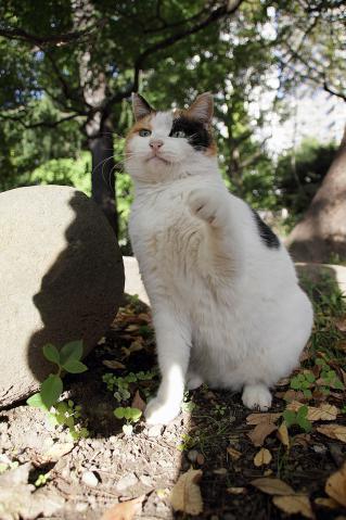 みこちゃん猫パンチ