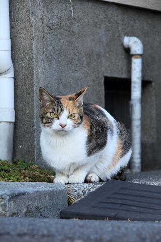 猫のお母さん