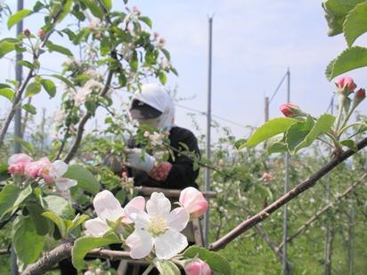花摘み作業