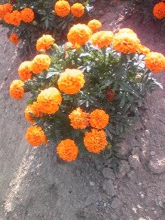 moblog_22d86f70.jpg