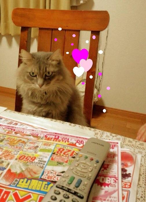 椅子に毎朝座り朝ご飯が並ぶまでダイニングテーブルの新聞やチラシを見る、元その死にかけのホームレスだったゴン三郎王子