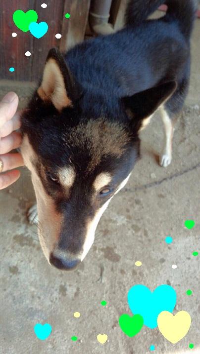 犬の黒ちゃん1