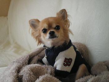 あたらしい セーター