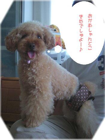 CIMG4619a.jpg