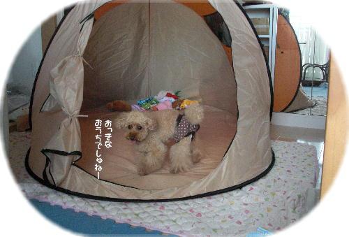 CIMG4622a.jpg