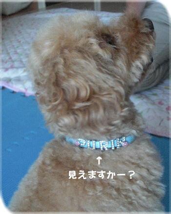 CIMG4636a.jpg