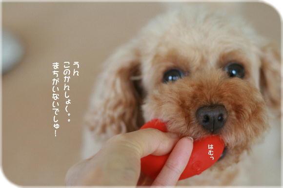 IMG_9923a.jpg