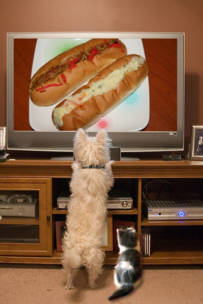 pets_watch_tv_1duonwvmi.jpg
