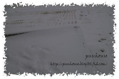 20110116-043.jpg