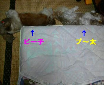 2010081601540000.jpg