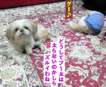 2011112719110000.jpg