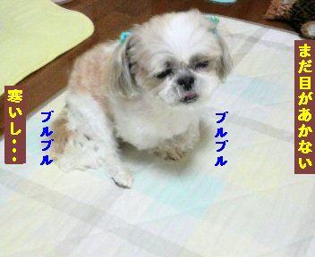 2011120208070001.jpg