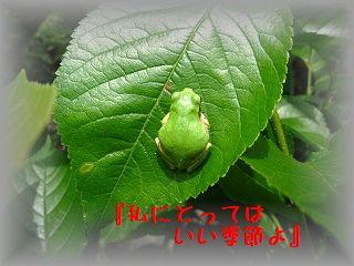 IMG_0553_20110526203619.jpg