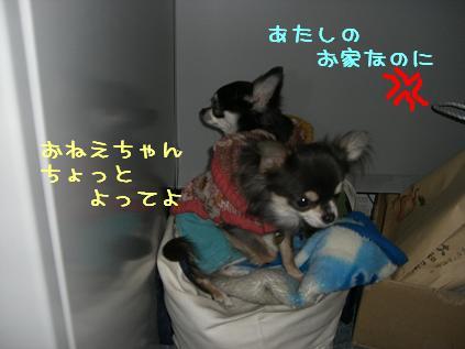 CIMG1197_20110215200926.jpg