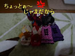 P1000578_20101205151928.jpg