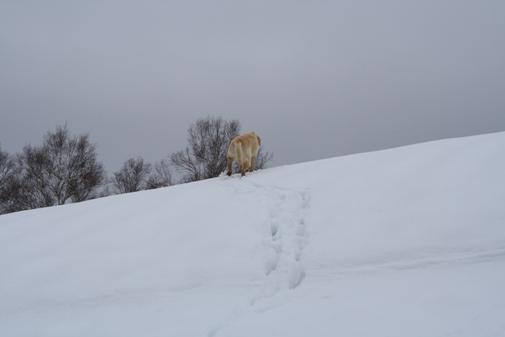 がんばっているね~。雪犬みたいだよ。