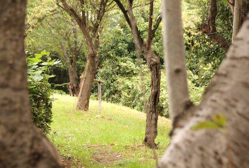 イーノの森