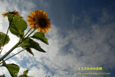 s-DSC_0413kai.jpg