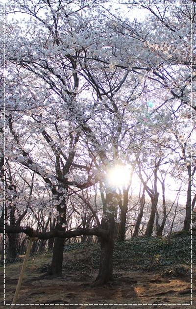 20120414_11.jpg