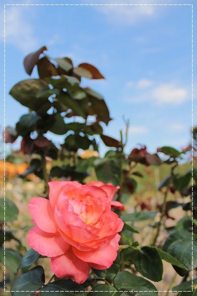 20121015_3.jpg