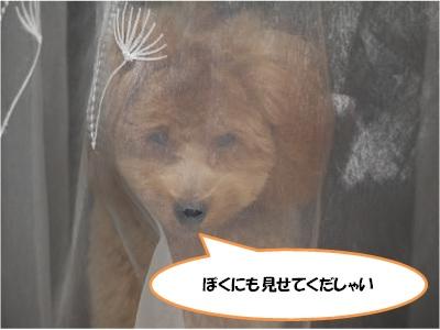 P1020275_convert_20101115183919.jpg