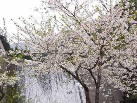 20120430-sansai-07.jpg