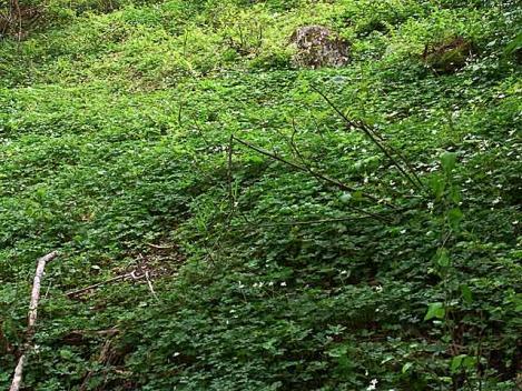 20120508-8ouji-21-nirin01.jpg