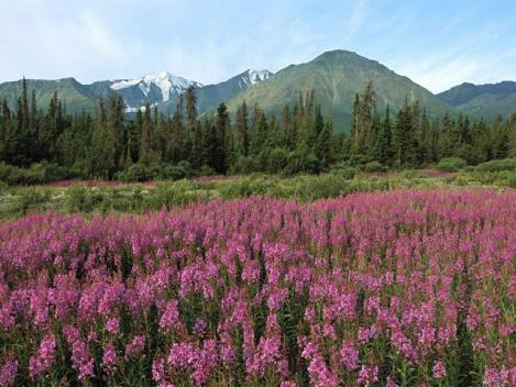 yanagiran-Kluane_National_Park_Canada.jpg