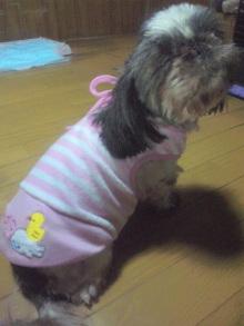Doki☆Waku☆シーチャンズ♪♪-100630_205930.jpg
