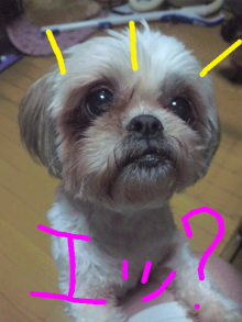 Doki☆Waku☆シーチャンズ♪♪-Image002.jpg