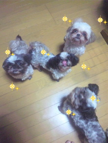 Doki☆Waku☆シーチャンズ♪♪-100713_222831.jpg