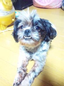 Doki☆Waku☆シーチャンズ♪♪-100903_190847.jpg