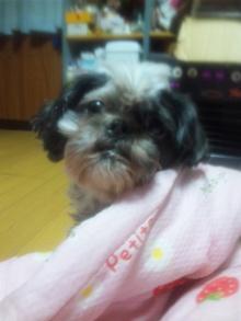Doki☆Waku☆シーチャンズ♪♪-100914_014817.jpg