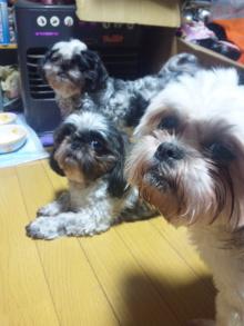 Doki☆Waku☆シーチャンズ♪♪-100922_014424.jpg