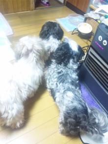 Doki☆Waku☆シーチャンズ♪♪-110218_013952.jpg
