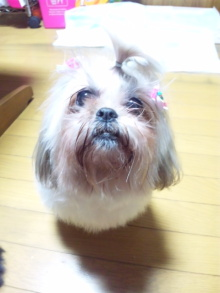 Doki☆Waku☆シーチャンズ♪♪-110221_202912.jpg